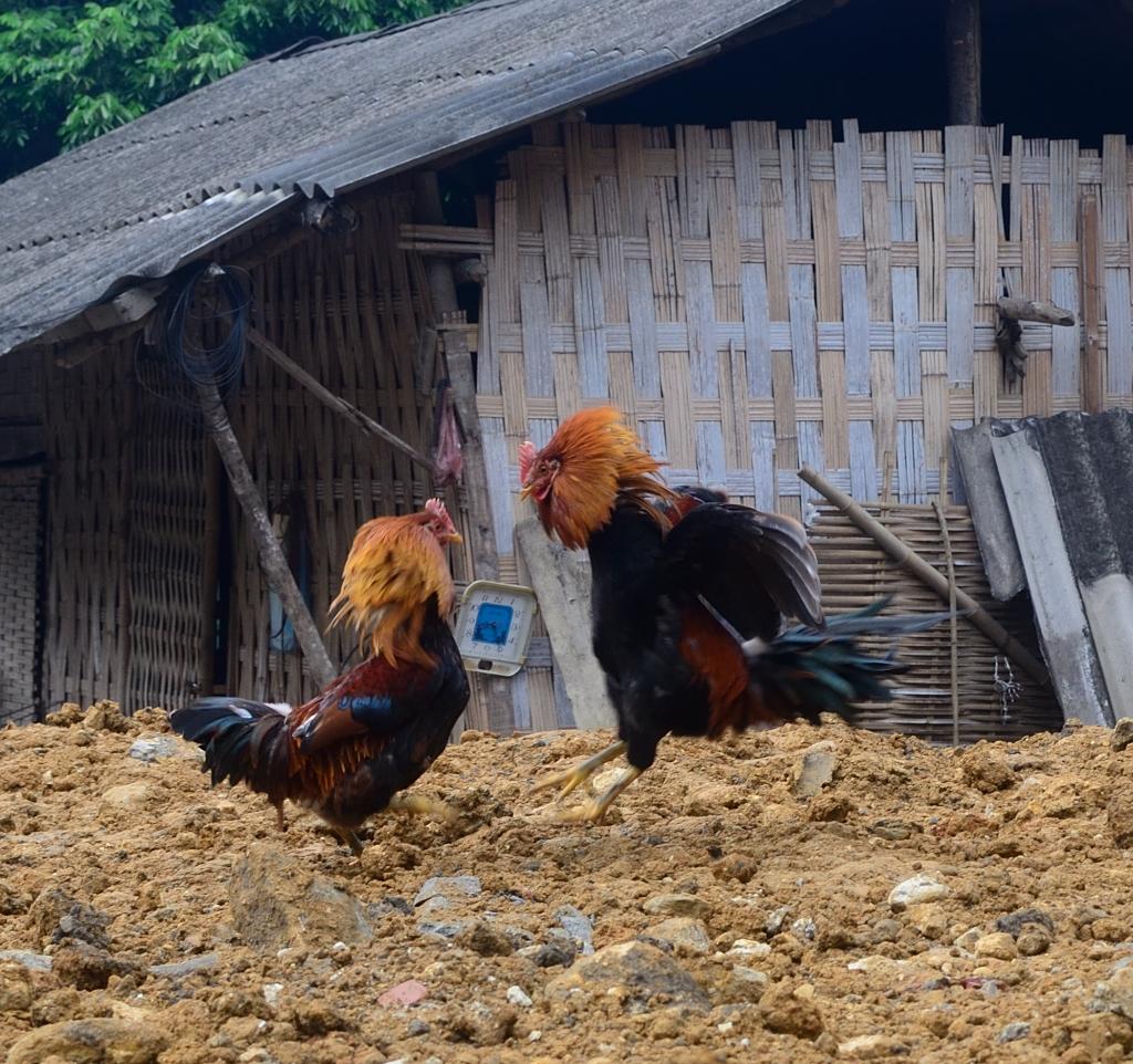 vietnam-2016-10-11-012